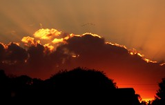 Sun is Setting (priscilla.starling) Tags: autumn light sunset shadow orange color fall home nature flying geese photo october day glow bright florida oneofakind flock sunrays newportrichey mybestphotos beautifulworld sunshotsanyweather weatherphotography anawsomeshot skypoetry wowirkazowie mothernatureatherbest perfectsunsetssunrisesandskys betterthangood priscillastarling yourpreferredpictures skiescloudsandsun flaphotos articticintegrity sunandcloudsandetc thebestpicturegallery stunningproshots