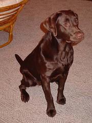 Sitting Pretty Dakota Pup