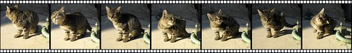Picores felinos