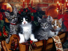 Christmas Kittens (kruhme) Tags: santa christmas xmas wallpaper pet cats pets cute animal cat weihnachten navidad kat kittens gatos gifts gato presents felinos felino trips animales katze greetings claus gatitos resorts awaiting vacations flights fondo villas breaks cruises tier packages minute cottages fondodeescritorio hintergrundbilder minino christmaskittens bestofcats