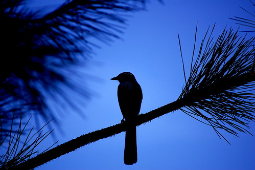 Blue + Bird by OctopusHat, on Flickr