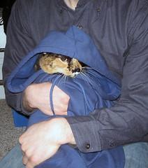 Kitty Torture