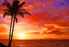 Fiery Sunset (janruss) Tags: sunset red sun tree hawaii bravo maui harmony sensational bec picturesque soe bestofflickr themoulinrouge naturesfinest blueribbonwinner faveme lifeasiseeit supershot magicdonkey 100faves top20sunsets top20hawaii burningskys bej mywinners abigfave shieldofexcellence platinumphoto colorphotoaward aplusphoto flickrplatinum 200750plusfaves goldenphotographer favemegroup7 citrit ysplix exemplaryshots 75faves brillianteyejewel brilliant~eye~jewels colourartaward platinumheartaward artlegacy colourartawards natureoutpost bestofsummer betterthangood thegardenofzen absolute10 theroadtoheaven thegoldendreams goldstaraward great123 world100f digitaleloquence exquisiteimage anthonycolour spiritofphotography obq 100commentgroup colorphotoawardbronze colorphotoawardsilver colorphotoawardgold panoramafotogrfico thebestofmimamorsgroups janruss janinerussell trulybetterthangood betterthanbetterthangood theadmirergroup