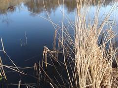 300 (H a n s) Tags: lake water see meer wasser natuurmonumenten plassen ankeveen ankeveenseplassen ankeveense