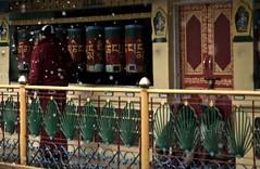 DSC_3516 (thetigerduck) Tags: india dharamsala mcleod ganji