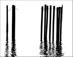 bird (Steven Schnoor) Tags: reflection bird art water silhouette washington pugetsound ripples pilings posts schnoor imagesmyth