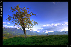 ~ Lonesome Tree ~ (Klaus_GAP - taking a timeout) Tags: mountains tree green clouds germany bayern deutschland bavaria photoshopped meadow wiese wolken bluesky berge grn baum blauerhimmel hdr hdri flickrsbest mywinners abigfave platinumphoto impressedbeauty theperfectphotographer goldstaraward softmapped