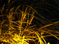 just a lamp with grass               on the top:-) (baltic_86 (mostly off)) Tags: light lamp beautiful grass night southcarolina iq beaufort trawa swiatlo supershot instantfave trawnik golddragon anawesomeshot ultimateshot goldstaraward baltic86