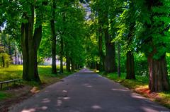 uphill (mattrulez) Tags: park trees light sun nature landscape spring alley nikon raw shadows path lane uphill hdr d300 krakoff salwator mywinners excellentphotographerawards