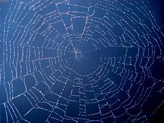 spider_web051