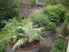 Michael Abbate's backyard Eden (courtesy of Michael Abbate)