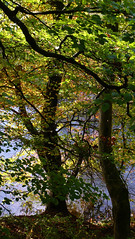 The Taff Through The Trees