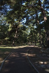 松原の遊歩道