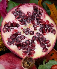 Pomegranates (Lara's  Stuff) Tags: fruit yummy pomegranate pomegranates homegrown punicagranatum pomegranatearils pomegranateanatomylesson pomumappleandgranatusseeded californiapomegranates hotterthesummersweeterthefruit