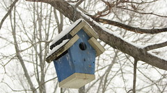 Bird house (Petunia21) Tags: blue snow newyork birdhouse hanging rockland rocklandcounty nanuet december132007 southparkavenue lexowavenue