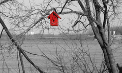 Bird feeder (velo_city) Tags: trees red bw water photoshop river rouge bare january stlouis birdfeeder mississippiriver desaturated saintlouis 2008 rft riverfronttrail