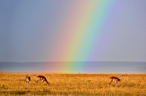 Rainbow Grazers