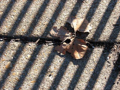 winter leaf and shadows 240108