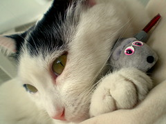 After the contact:)))) (sevgi_durmaz) Tags: pet cats cute animal animals cat sweet sleepy cuddle hugs sweetheart cuties mypet pamuk sleepycats playingcats mywinners kissablekat bestofcats impressedbeauty cuddlycats kittyschoice platinumheartaward