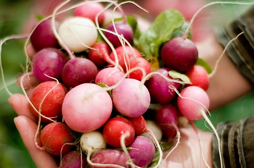 {201} a handful of radishes.