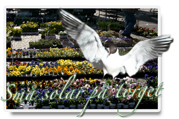 Solar_pa_torget