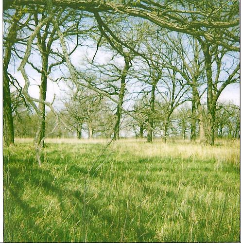 a circle of trees