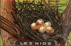 les nids 12