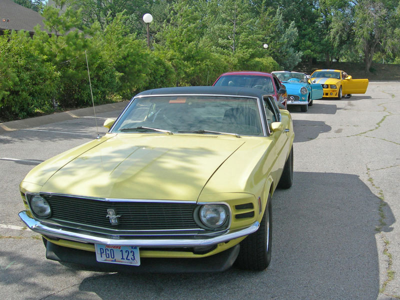 Mustang in line