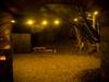 Vuurtoreneiland (Harry -[ The Travel ]- Marmot) Tags: holland nederland netherlands dutch hollands nl amsterdam mokum stadsarchief stedelijk stads vuurtoreneiland durgerdam wintereiland ijmeer ijburg tijdelijk temporary uitje leuk fortificatie verdediging popup good food dining souper kerst 2016 staatsbosbeheer restaurant markermeer nature natuur fortress stellingvanamsterdam boottocht boattrip lighthouse island hip trendy cool