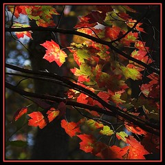 Autumn in the spotlight (Lumendipity) Tags: tree leaf sdr thats classy naturesfinest 10faves lumendipity thatsclassy