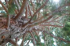 Парки расправляют ветви