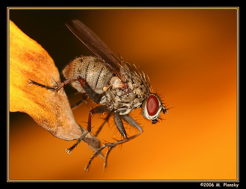 Perched Fly