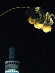Contrast (Alieh) Tags: blue architecture night persian iran minaret persia iranian  esfahan  isfahan quince    aliehs alieh