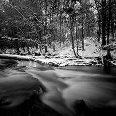 Bluejay Creek (eye of wally) Tags: film mediumformat pinhole pa format zero2000 zeroimage efker100 adoxchs100