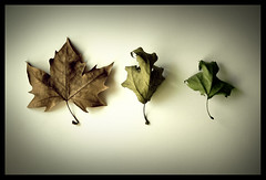 evolution _ 02 (vanni opv) Tags: green yellow leaf evolution growth inversion counterclockwise contemplazione marrore