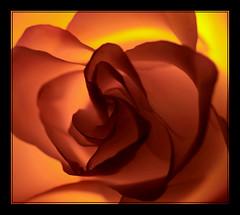 Kiss from a Rose (tandikes) Tags: flower rose play bored outoffocus torch poo excellence fedup goldenglobe supershot platinumphoto superaplus aplusphoto diamondclassphotographer flickrdiamond ilovemypic flowersandlines platinumheartaward dazzlingshots ahqmacro