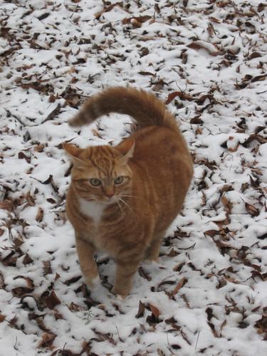 aj in snow 2