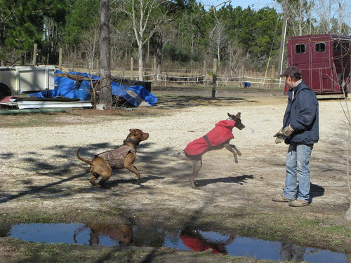 Renee and the pooches in Slidell, Louisiana, USA