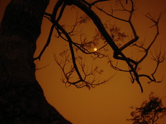 Resting Moon (prithvidsnx26) Tags: moon evening tress blacktree