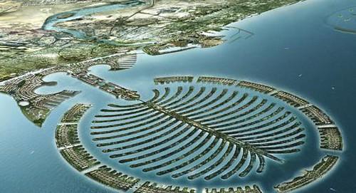 Dubia Palm Deira