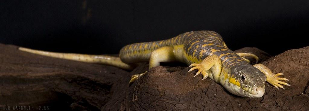 reptiler til salgs