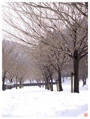 Snow 080217 #08