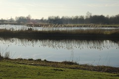 waterland (Ren Mouton) Tags: park holland reflection reed nature netherlands windmill amsterdam natuur riet molen wetland waterland wandeling 1580 spiegeling denilp ttwiske 10februari2008 achtkantigebovenbinnenkruier twiskemolen basingerhorn