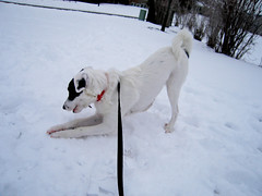 crazy snow! 016