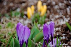 Spring sprunging at Flickr.com