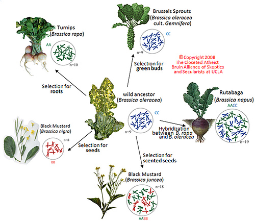 Plant Natural Selection Example