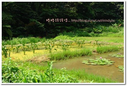 20080503桐花_044