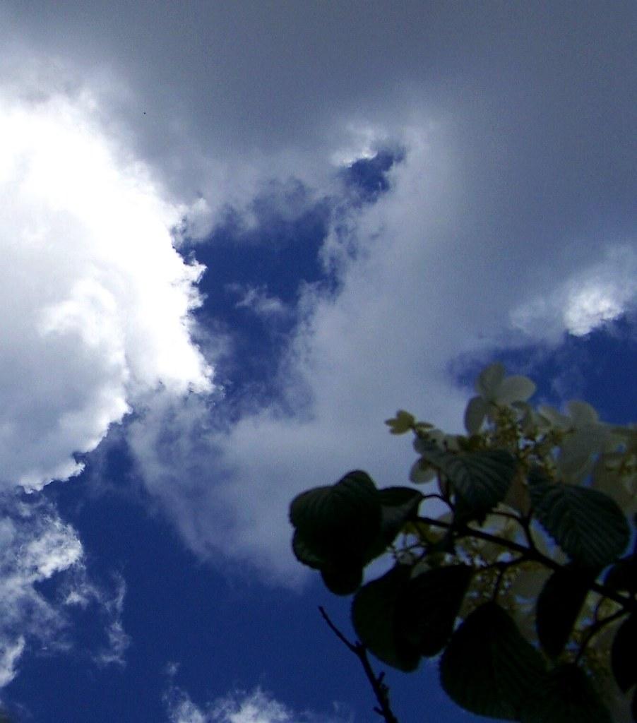 skywatch flower sky 5