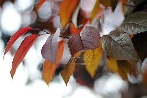 Bokeh leaves