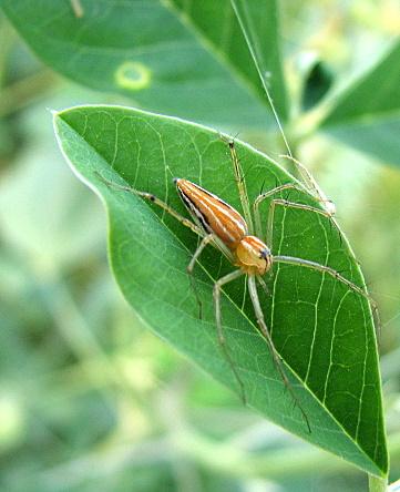 un id spider 141007